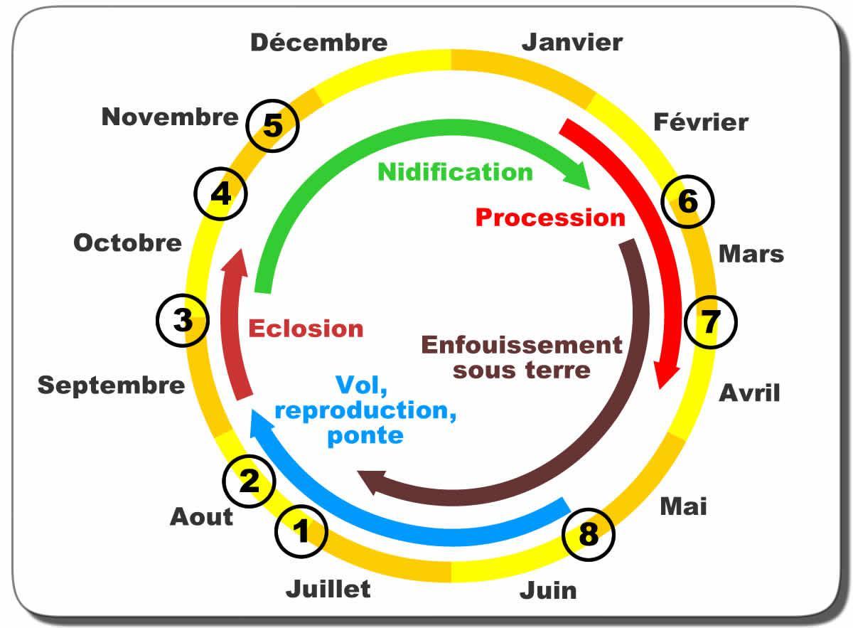 cycle-biologique